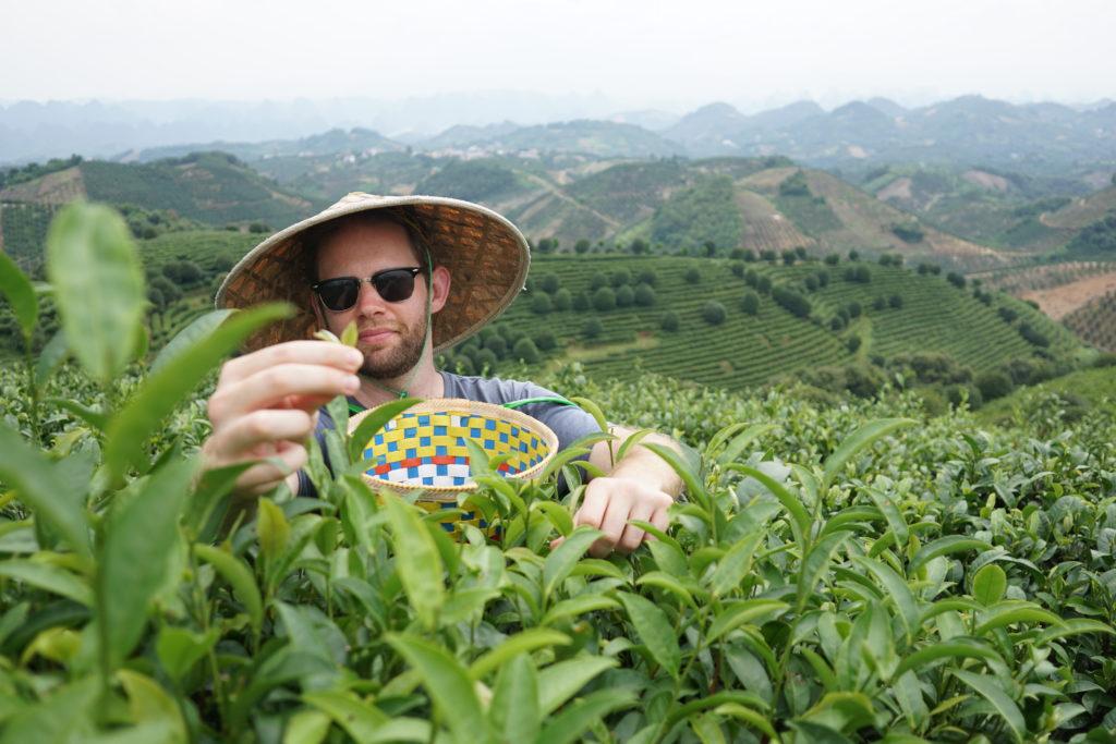 Picking Tea in Yangshuo
